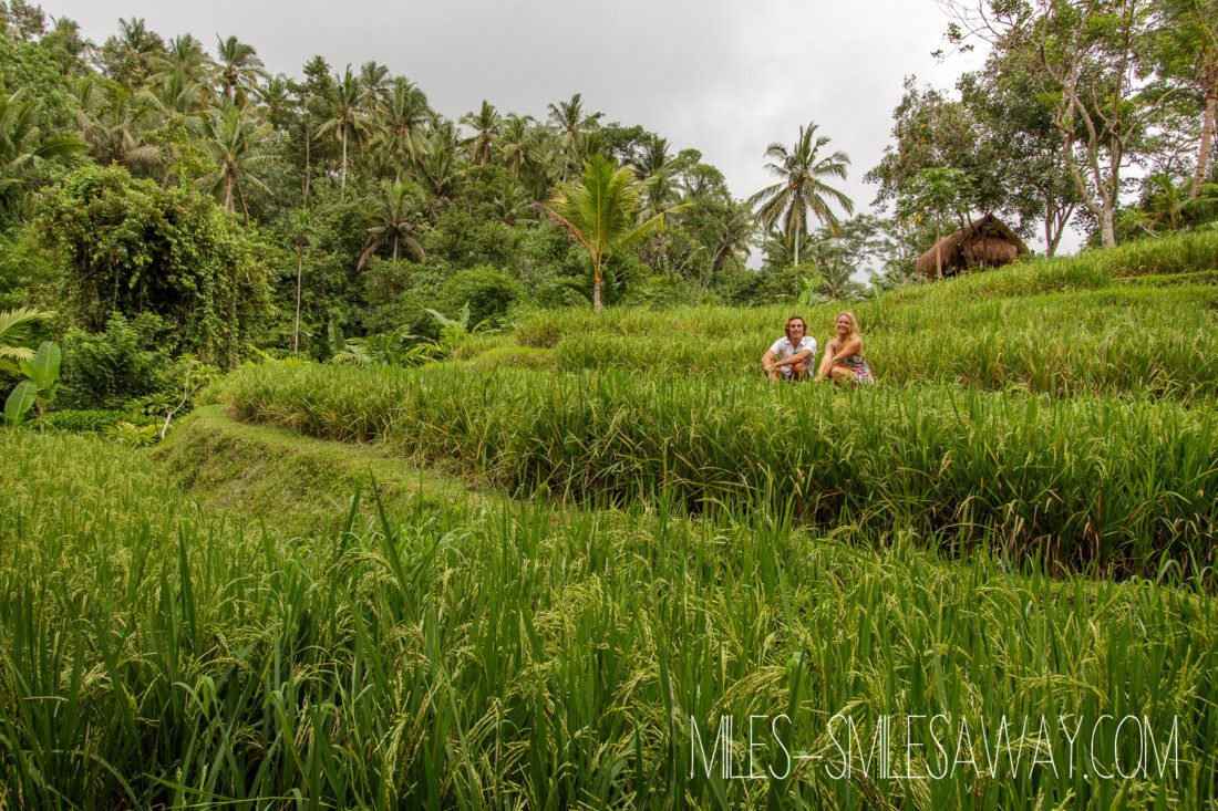 rice fields Komaneka Bisma resort in Ubud Bali