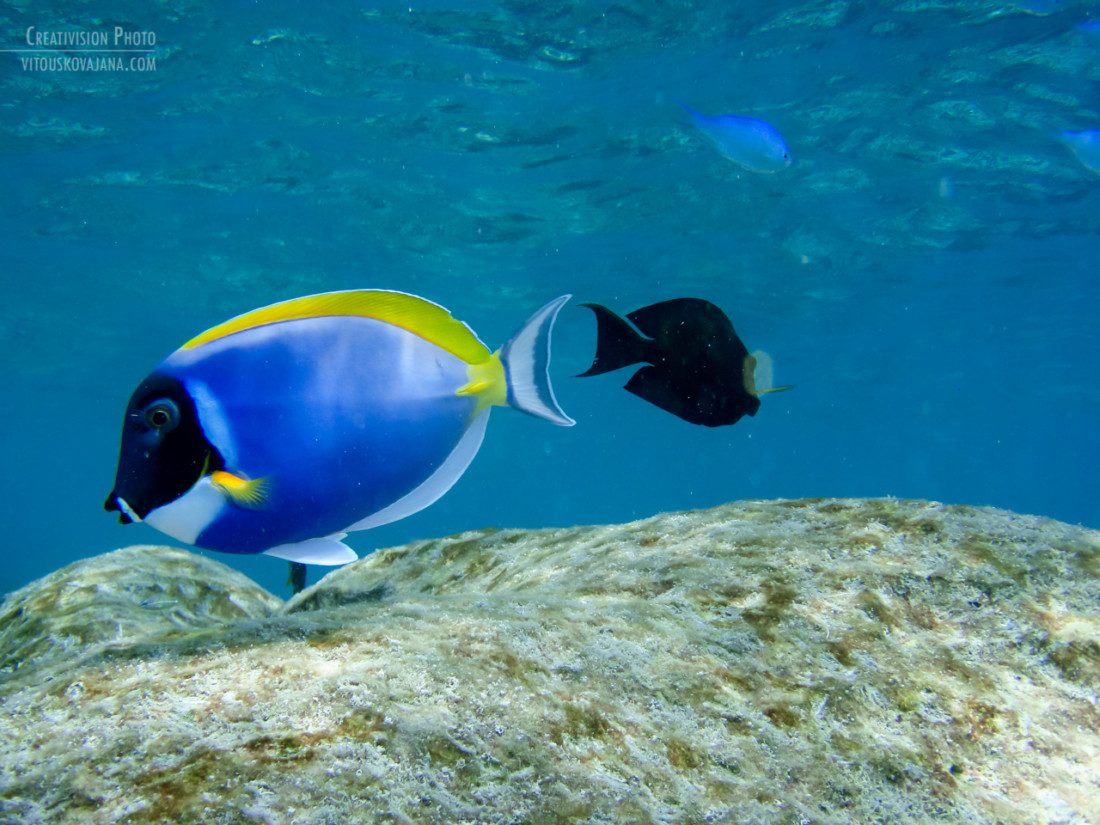 snorkeling at Four Seasons Landaa Giraavaru
