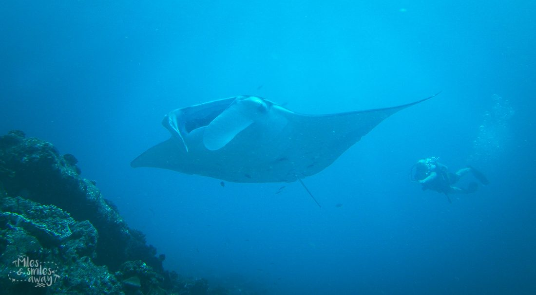 swimming with mantas in maldives