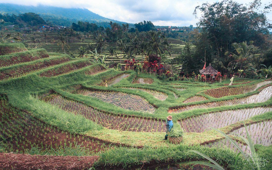 Jutiluwih rice terrace