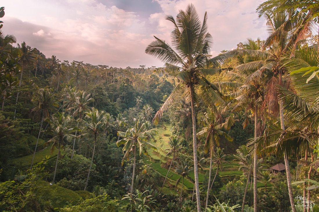 Gunung Kawi rice paddies